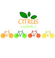 citrus bicycle vector image