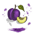 plum colorful sketch of hand drawn vector image vector image