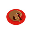 flat sleeping curled up dog pet icon vector image