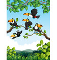 group of toucan in nature vector image