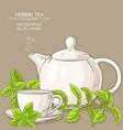 stevia tea vector image vector image