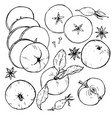 apples whole and cut into slices berries and spic vector image