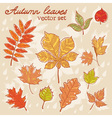 Autumn leaves colorful collection set vector image vector image