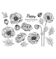collection set poppy flower and leaves drawing vector image vector image