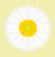 White daisy flower isolated on yellow background vector image vector image