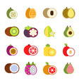 guava mango and others of tropical vector image