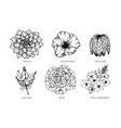 collection set of flower drawing vector image
