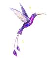 hummanbird watercolor vector image