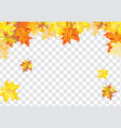 maple leaves on transparency grid vector image vector image