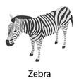 zebra icon isometric style vector image vector image
