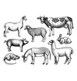 hand-sketched farm animals cow lama donk vector image