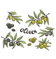 Set of green and black olives isolated objects vector image vector image
