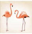 Beautiful pink flamingo birds vintage background vector image