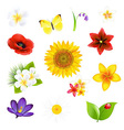 Big Flowers And Leaf Set vector image vector image