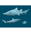 Decorative sharks in the sea with fish vector image vector image