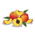 isolate ripe peach fruit vector image
