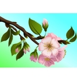 Apple-tree branch with flowers vector image vector image
