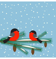 Cute bullfinches vector image