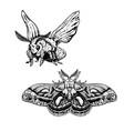 hand drawn set moth realistic sketches vector image vector image