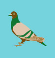 in flat style of dove vector image vector image