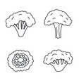 broccoli plant icon set outline style vector image