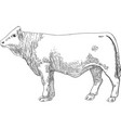 meat cow in style engraving vintage graphic vector image