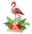 pink flamingo and red tropical flowers vector image vector image