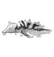 vertebrate brain vintage vector image vector image