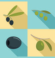 festival olives oil icon set flat style vector image