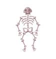 human skeleton happy halloween object cartoon vector image