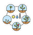 Plant growth stages infographics