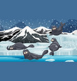 scene with seals on snow mountain vector image vector image