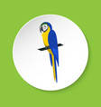 blue and yellow macaw parrot icon in flat style vector image vector image