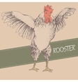 front rooster sketch vector image vector image