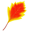 image of red and yellow autumn aspen leaf vector image vector image