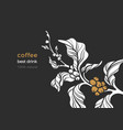 nature banner coffee branch leaves bean vector image