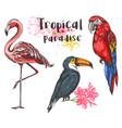 set tropical birds vector image