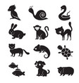 pets and home animals icons vector image