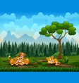 cartoon tiger and lion families playing in nature vector image vector image