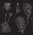 collection silver hand drawn peony and vector image vector image