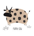 funny cow isolated on white vector image