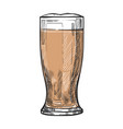 glass beer freehand pencil drawing vector image vector image