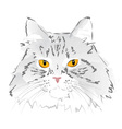 Muzzle gray cat vector image vector image