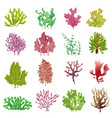 seaweed set sea plants ocean algae and aquarium vector image vector image