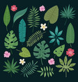 tropical leaves flowers tropic hibiscus vector image