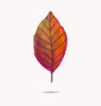 watercolor leaf vector image