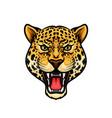 jaguar head isolated cartoon mascot design vector image