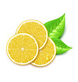 lemon slice vector image