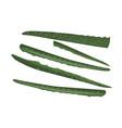aloe vera slices organic succulent herb vector image