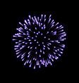 firework purple bursting isolated black background vector image
